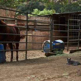 Rancho Providencia 24