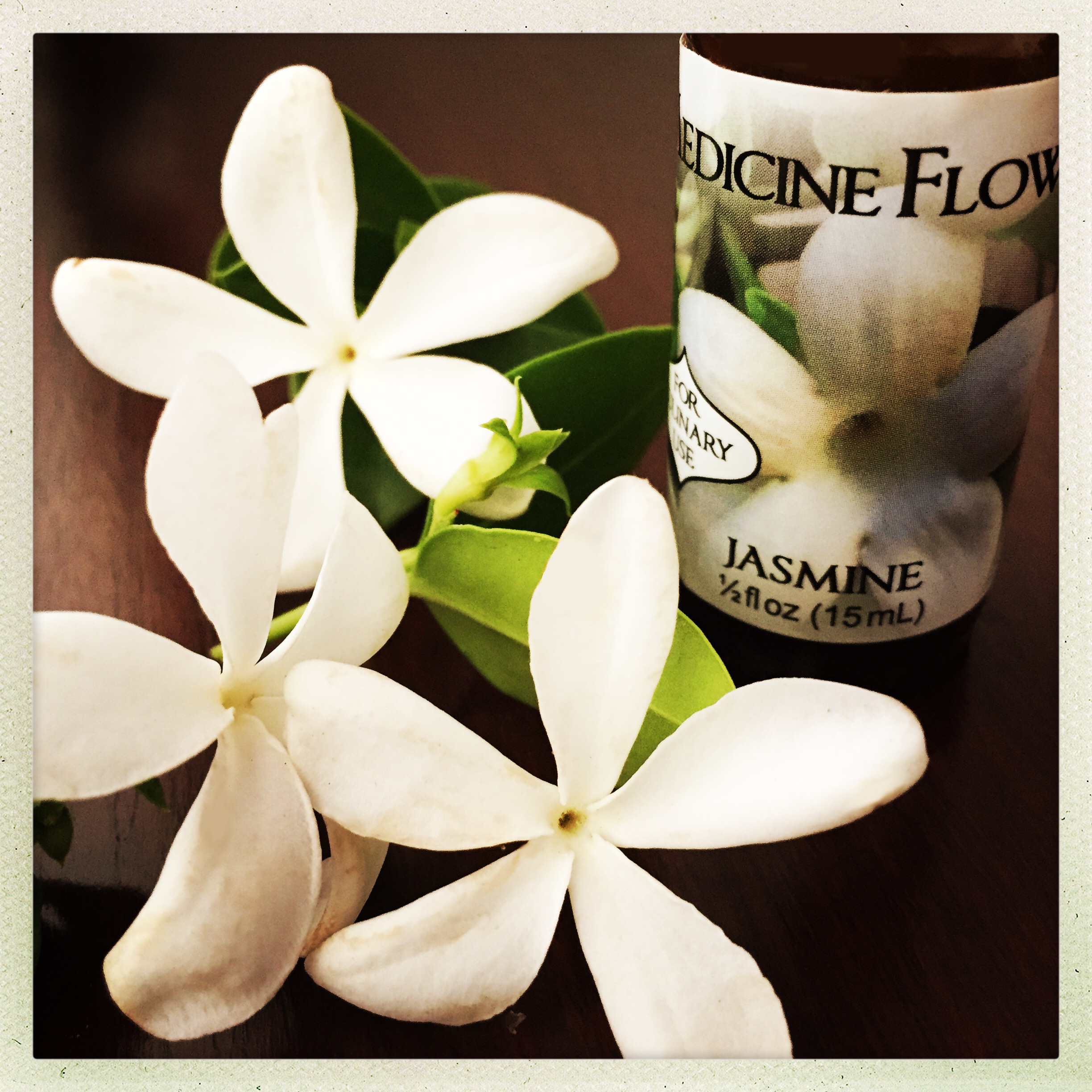 A taste of your own medicine flower the swoon society jasmine flavor extract izmirmasajfo