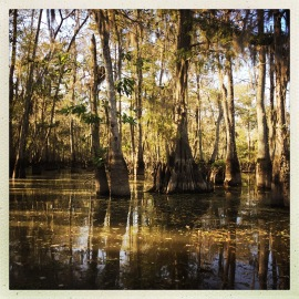 swamp-water